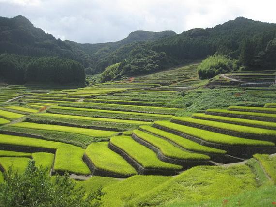 рисовые террасы4 (570x428, 125Kb)