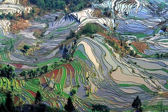 рисовые террасы6 (570x380, 194Kb)