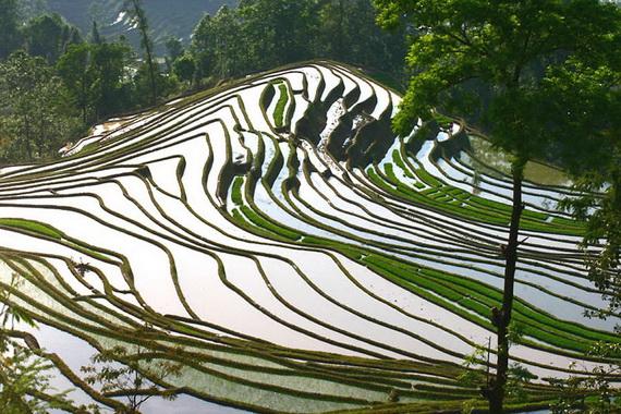 рисовые террасы9 (570x380, 160Kb)