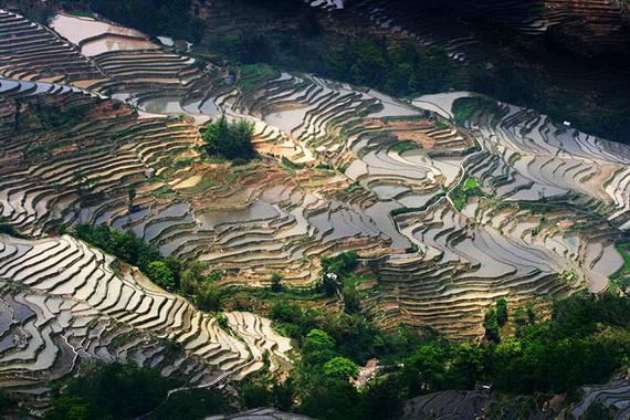 рисовые террасы11 (570x380, 160Kb)
