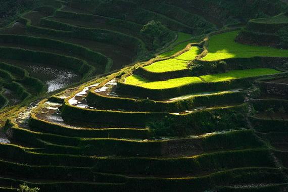 рисовые террасы13 (570x380, 110Kb)