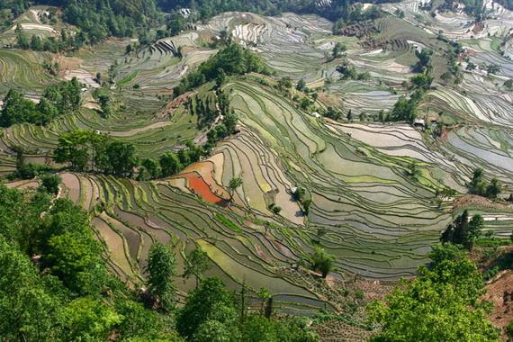 рисовые террасы15 (570x380, 171Kb)