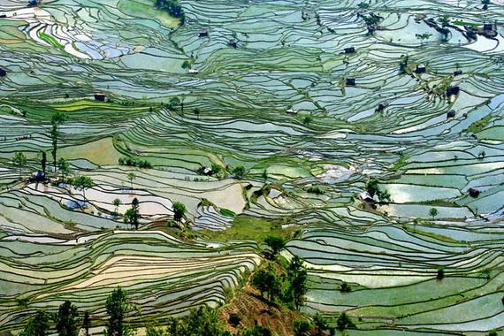 рисовые террасы17 (570x380, 184Kb)