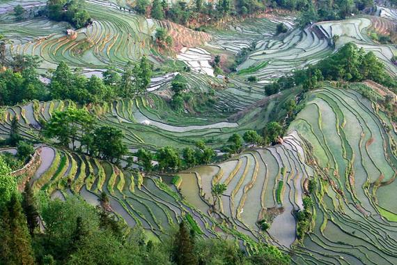 рисовые террасы19 (570x380, 174Kb)