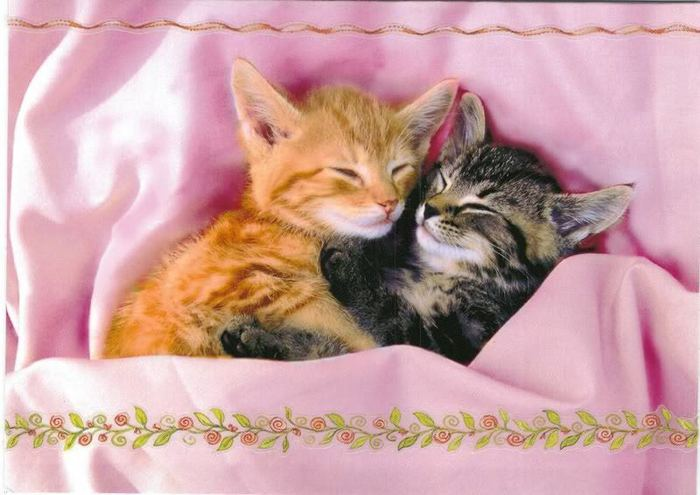 Cute-Kittens-kittens-13247987-800-566 (700x495, 51Kb)