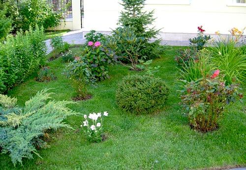 Лилия в саду: посадка и уход / Цветы и клумбы / Мои дачи
