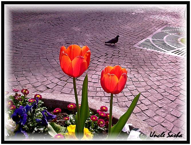 foto-0028.04.12.4 (668x508, 165Kb)