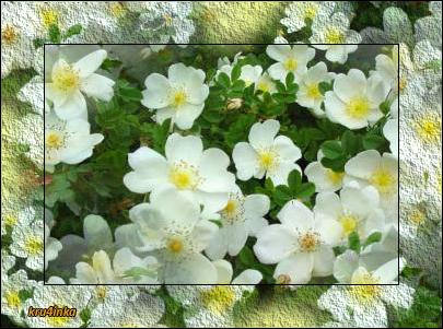 цветочки-белые (405x301, 259Kb)