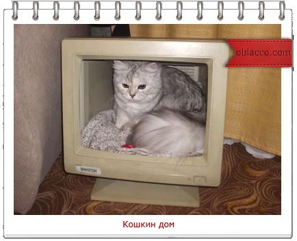 Домики для кошек своими руками из газетных