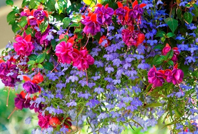 Комнатное цветоводство 86715976_large_15