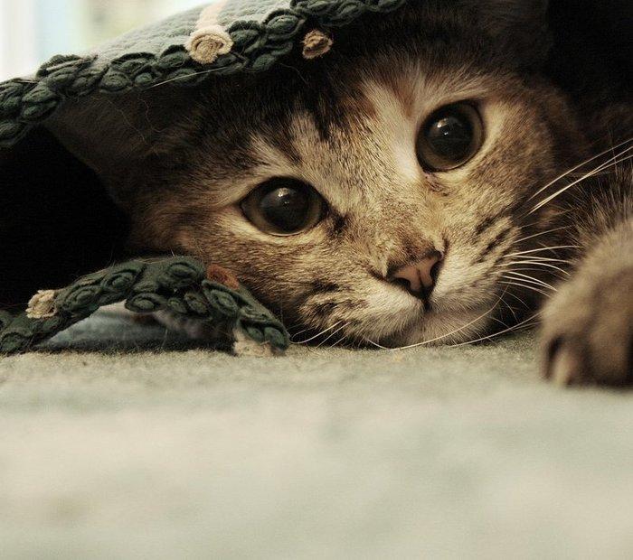1335879242_cats_cm_20120217_00343_008 (700x620, 79Kb)