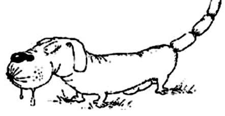 У собаки шпора на лапе у собаки
