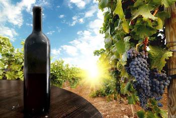 вино (350x235, 40Kb)