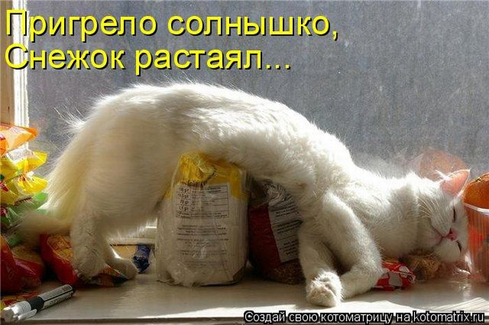 1300413753_kotomatritsa (700x465, 69Kb)