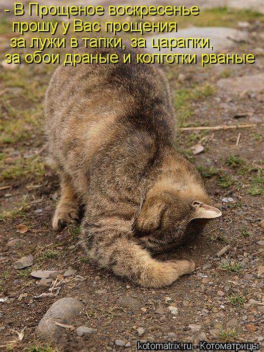 1300413757_kotomatritsa-3 (525x700, 124Kb)