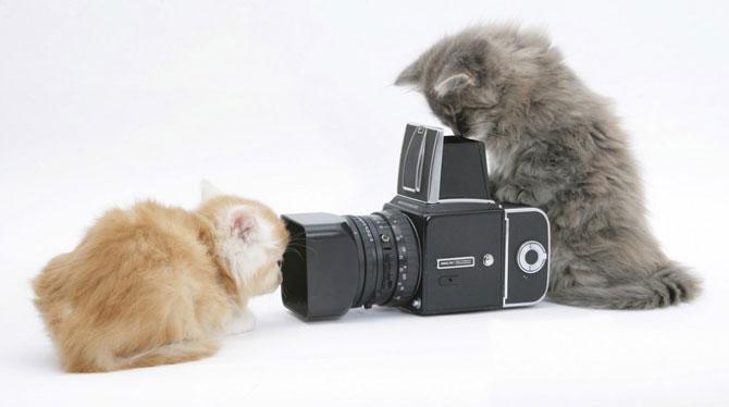 смешные животные фото 3 (670x374, 27Kb)