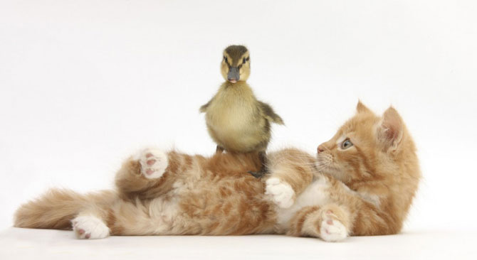 смешные животные фото 5 (670x366, 24Kb)
