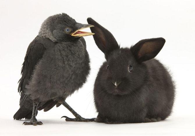 смешные животные фото 7 (670x468, 36Kb)