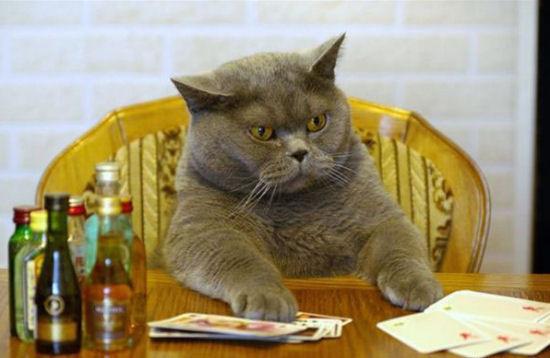 poker-cat (550x358, 46Kb)