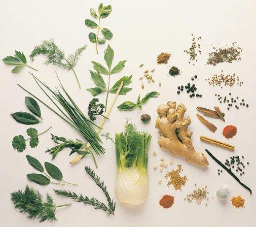 4524271_medicinal_herbs_guide_2 (505x447, 51Kb)