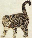 Превью European Cat (251x300, 19Kb)