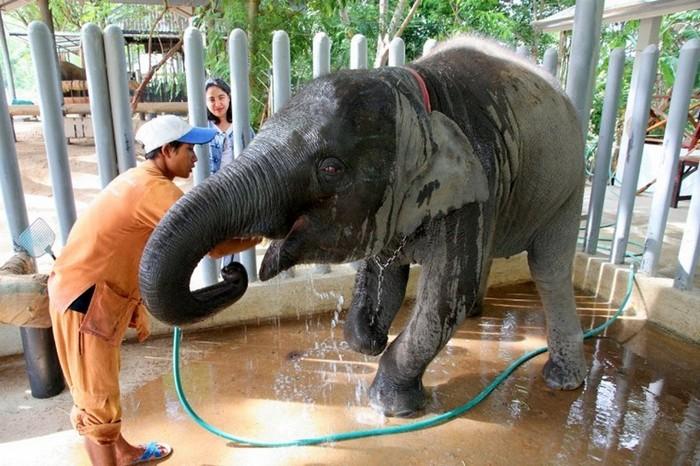 4121583_elephanthospital142 (700x466, 118Kb)