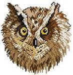 Превью Owl Portrait (153x157, 9Kb)