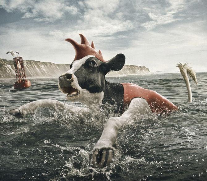 смешные коровы фото 8 (670x584, 108Kb)