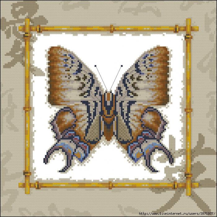 3971977_Butterflies_026 (700x700, 493Kb)