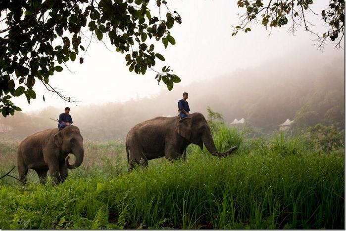 Фото-путешествие на острова Таиланда 17 (700x468, 113Kb)