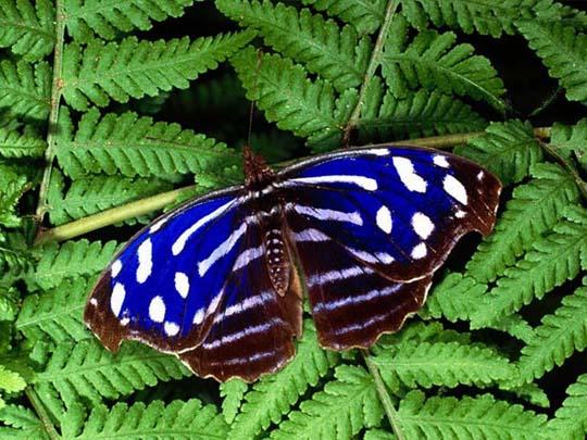 Самые красивые насекомые на Земле - бабочки.  Яркие, порхающие, фантастические существа.  Их расцветка восхищает и...