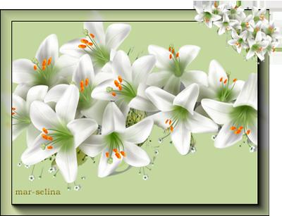 Белые-лилии (400x307, 142Kb)