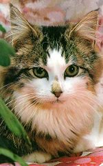 Кошка (150x242, 13Kb)