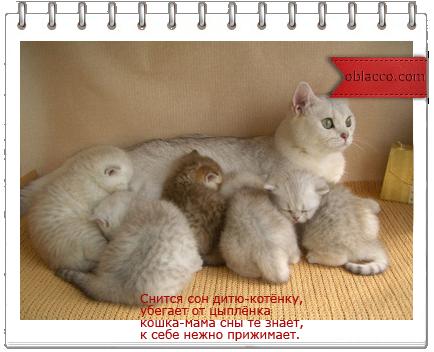 кошка мама/3518263__ (434x352, 218Kb)