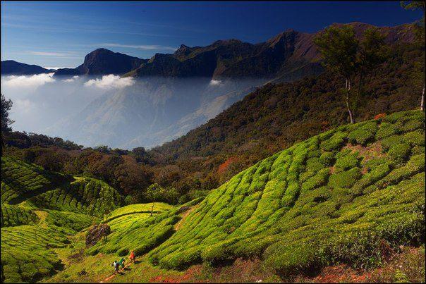 Керала, Индия... (604x403, 65Kb)