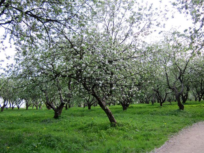 Коломенское Сады 12 (700x525, 226Kb)