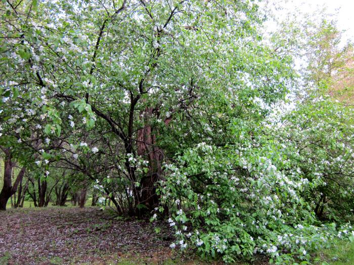 Коломенское Сады 29 (700x525, 251Kb)