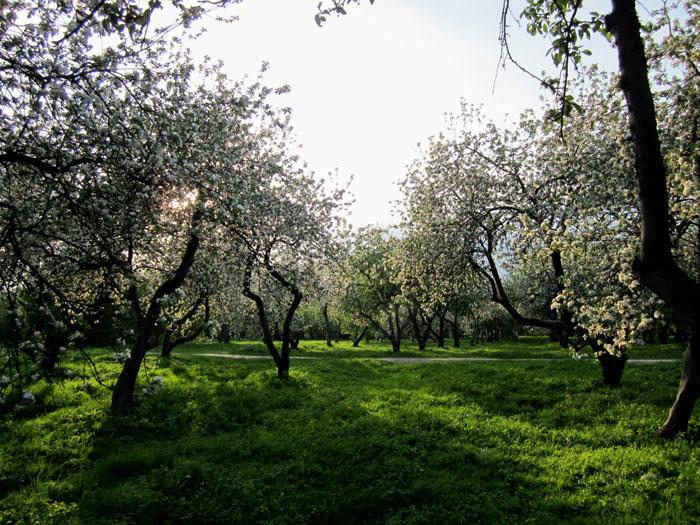 Коломенское Сады 49 (700x525, 195Kb)