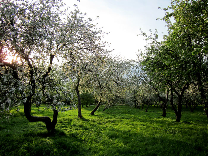 Коломенское Сады 50 (700x525, 205Kb)