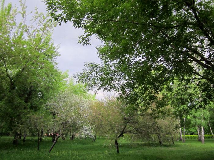 Коломенское Сады 60 (700x525, 178Kb)