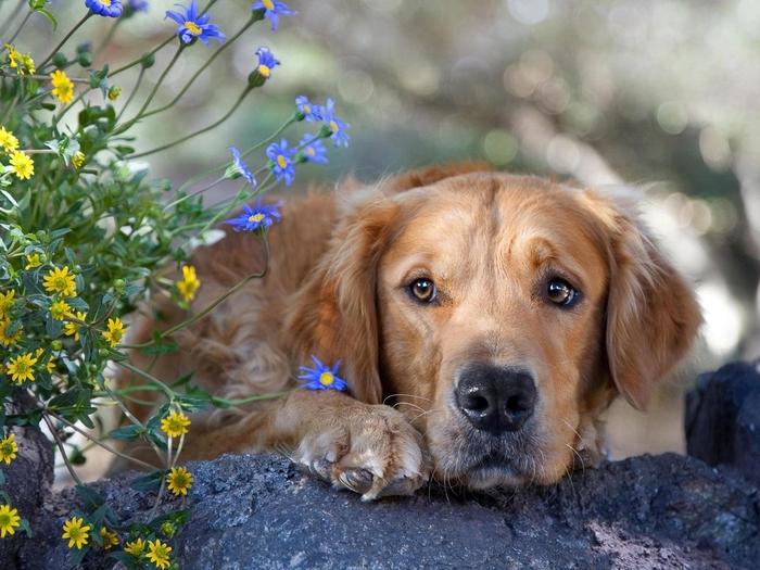 собака (700x525, 299Kb)