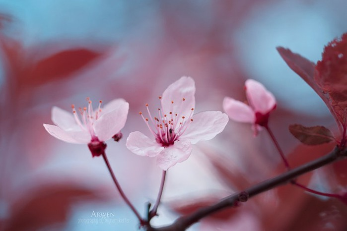 красивые фото цветов Myriam Kieffer 5 (700x466, 44Kb)