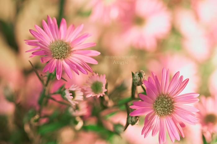 красивые фото цветов Myriam Kieffer 7 (700x466, 64Kb)