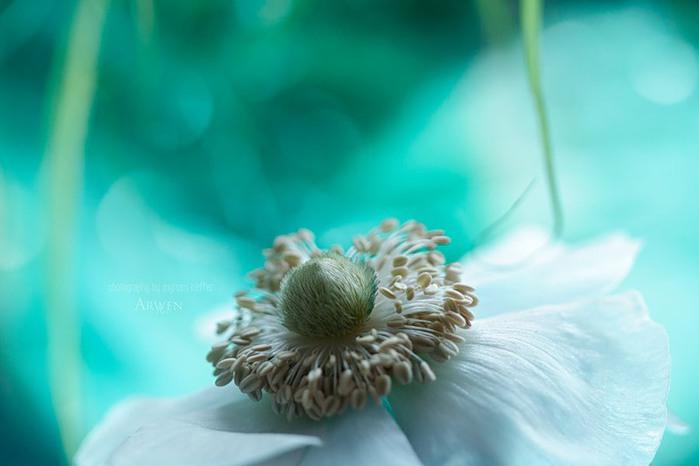 красивые фото цветов Myriam Kieffer 9 (700x466, 48Kb)