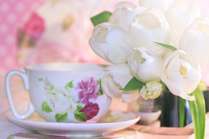 красивые фото цветов Myriam Kieffer 11 (700x466, 53Kb)