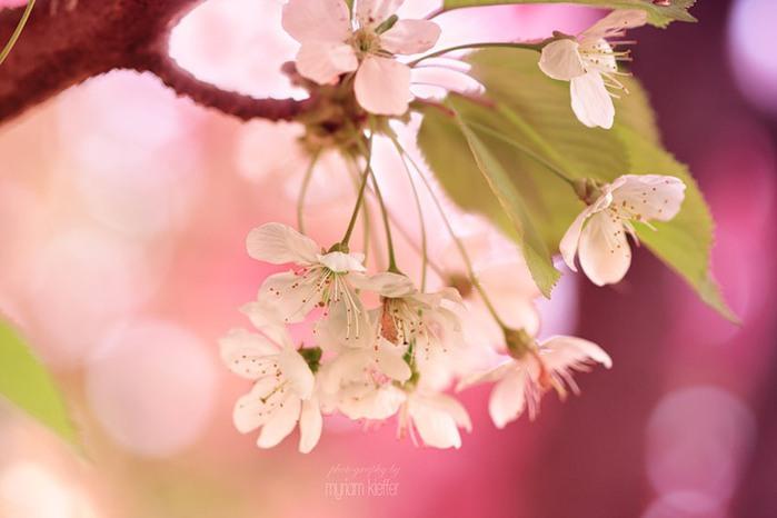 красивые фото цветов Myriam Kieffer 15 (700x466, 56Kb)