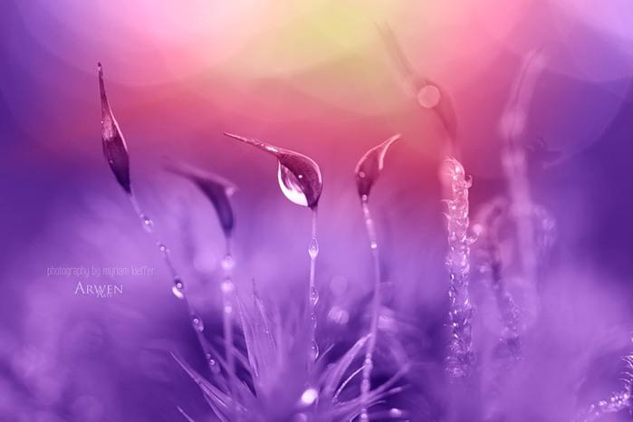 красивые фото цветов Myriam Kieffer 17 (700x466, 44Kb)