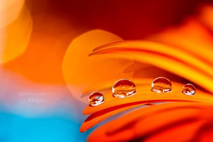 красивые фото цветов Myriam Kieffer 19 (700x466, 45Kb)