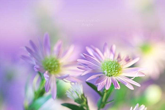 красивые фото цветов Myriam Kieffer 21 (700x466, 44Kb)