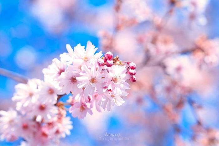 красивые фото цветов Myriam Kieffer 1 (700x466, 58Kb)
